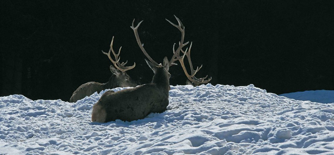 Animali D Inverno La Lotta Per La Sopravvivenza Ambiente Trentino