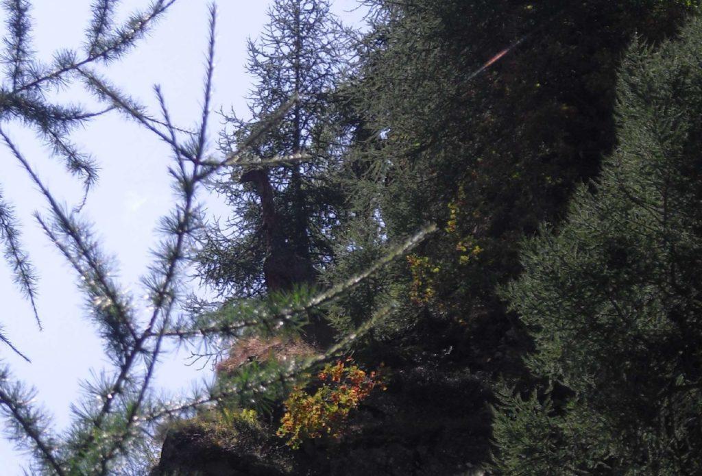 Ambiente Trentino - Il dinosauro - Scalinata dei larici monumentali