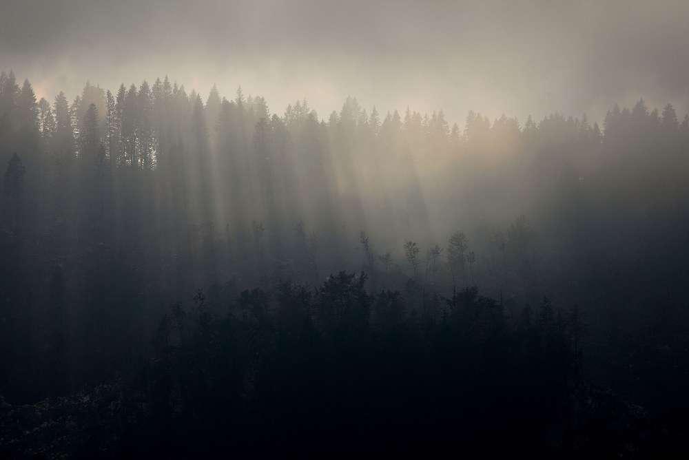 Foresta, Altopiano di Folgaria, Lavarone, Luserna - Fototeca Trentino Sviluppo, foto Pio Geminiani