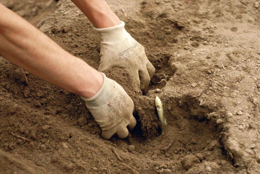 Le mani nella terra, Luca Chistè (foto 18)