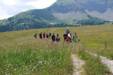 Famiglie in gita con gli asini sul monte Peller (Val di Non)