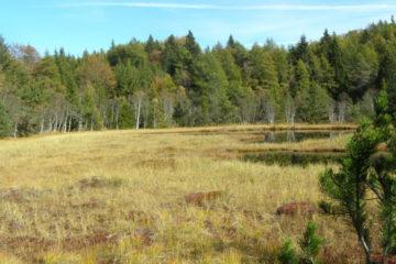 I boschi attorno al Lac del Védes