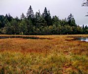 torbiere-Lac-del-Vèdes