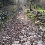 sentiero_bosco_caproni