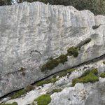 roccia_bosco_caproni