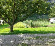 Azienda_agricola_Campenal_campo_diurno