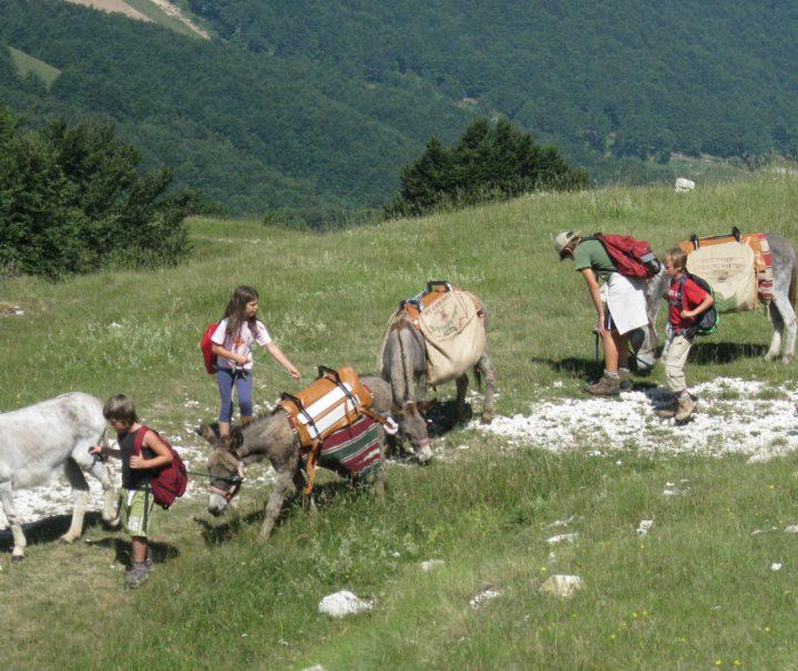 campeggio_itinerante-con-asini