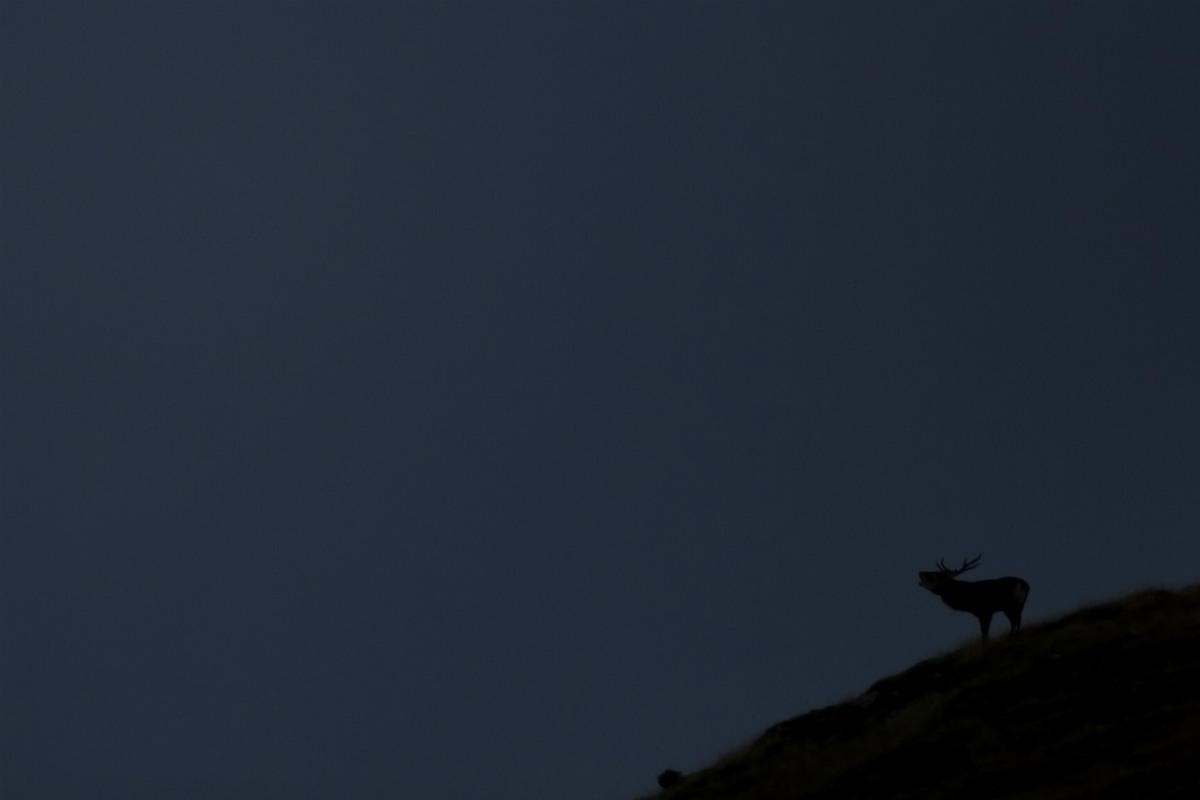 cervo notturno_foto_Mattia_Dori