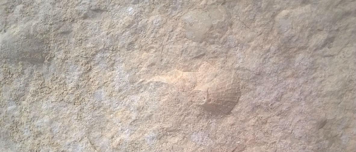 fossile-dolomiti
