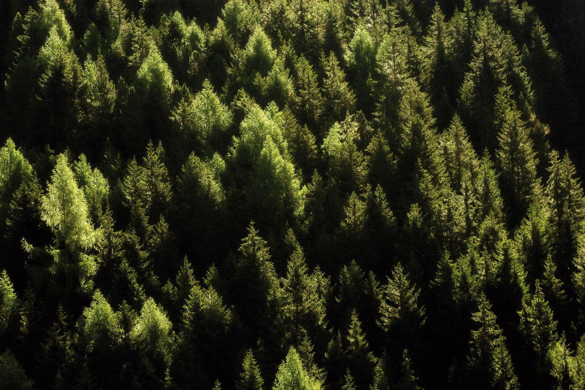 Val di Fiemme - Foresta (foto di Giulio Montini)
