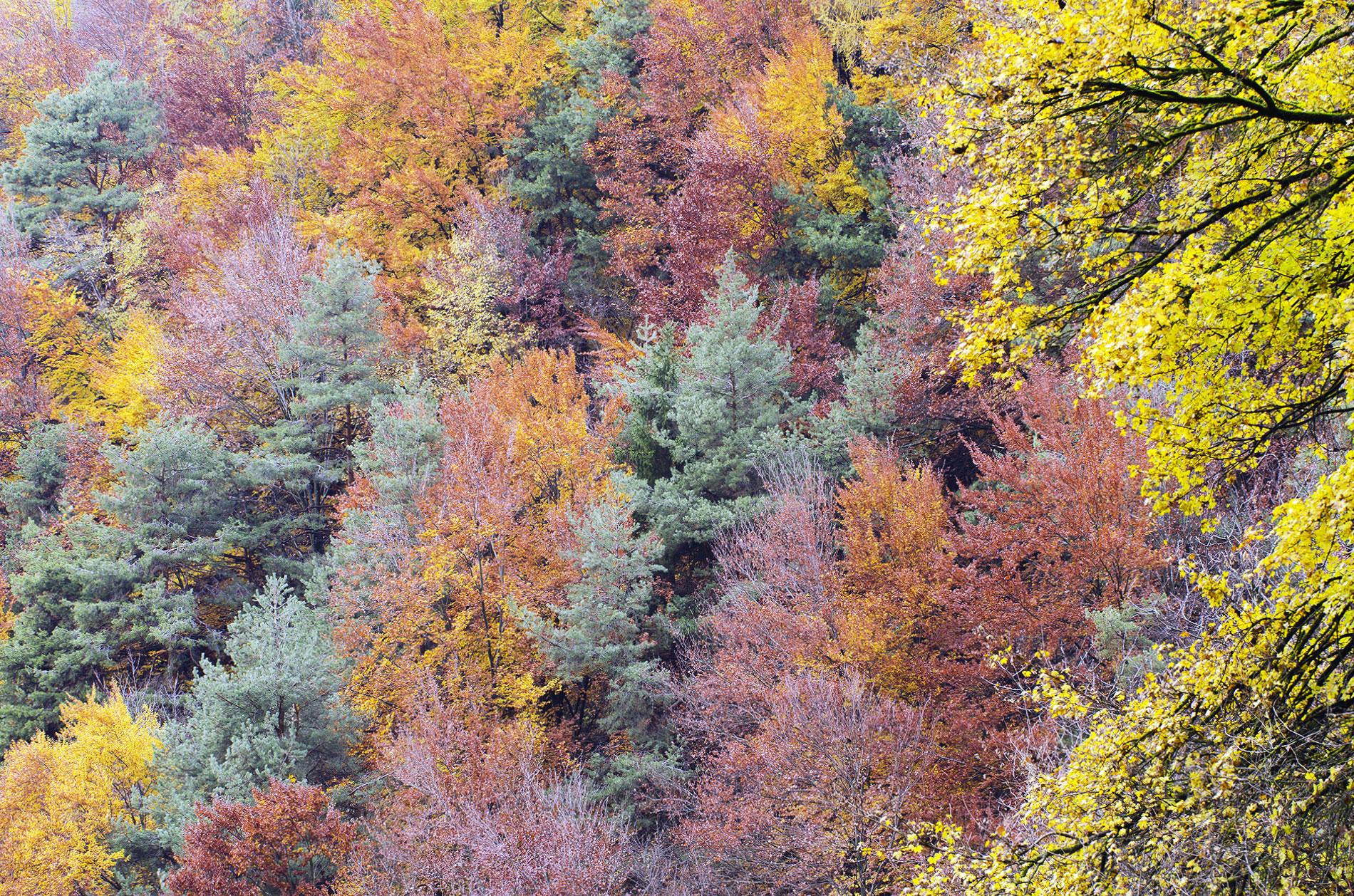Foliage in alta Val di Cembra: magie d'autunno all'alba