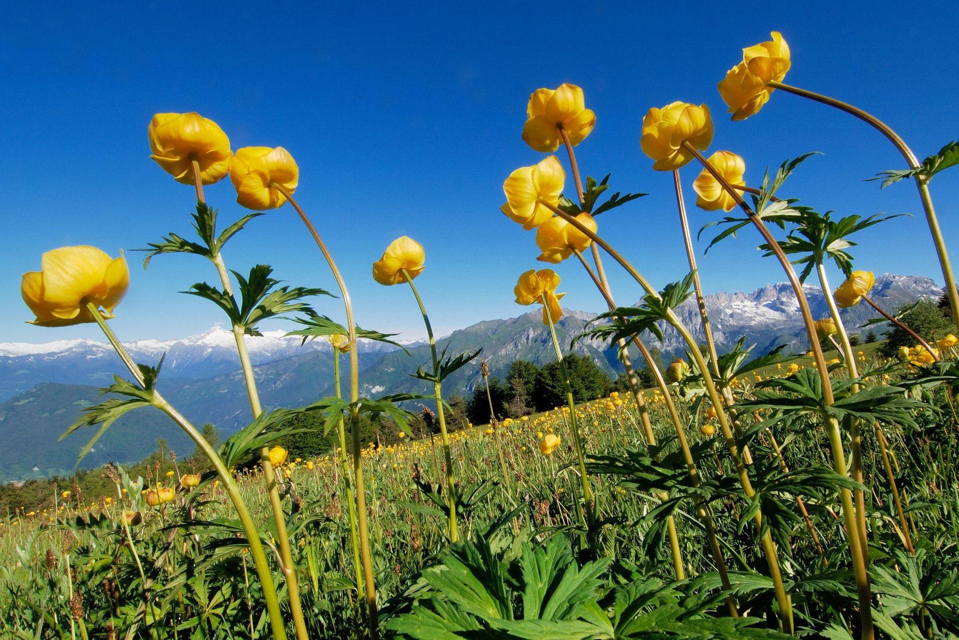 Herb walks in Val Lomasona