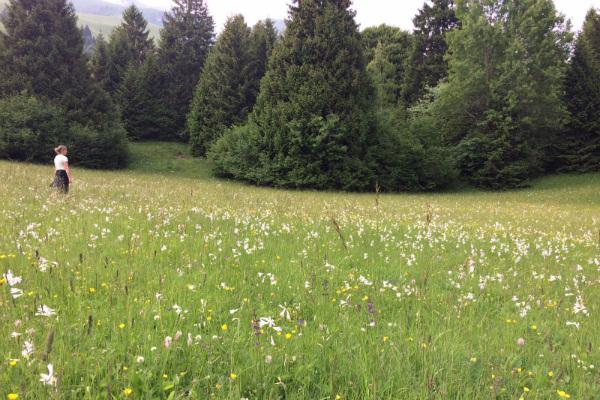 prati-prada-fiori-bosco