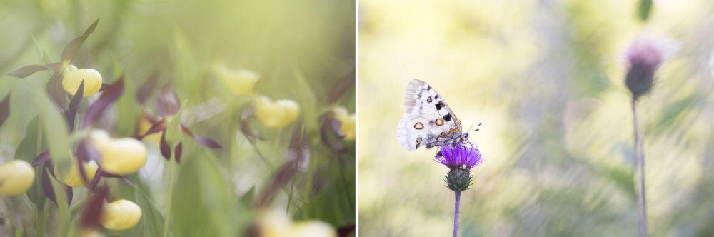 fotografia naturalistica di Fabio Ghisu
